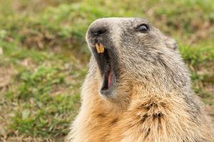delve-98-groundhog