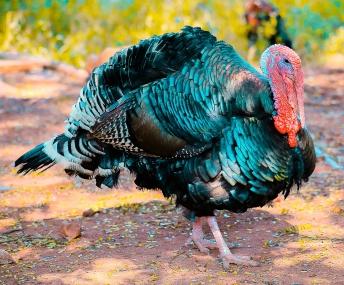 beak-beautiful-bird-1078781.jpg
